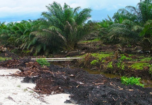 The Palm Oil Conundrum