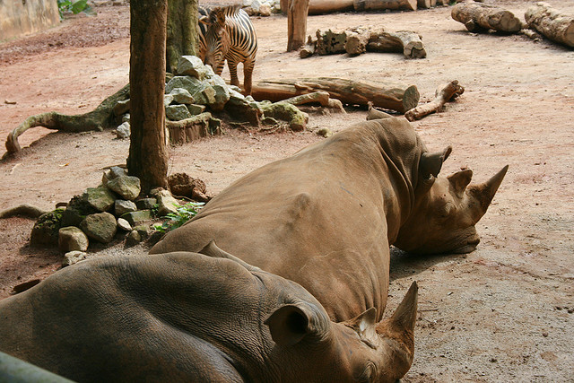 Malaysian Zoos in Violation of Wildlife Conservation Act