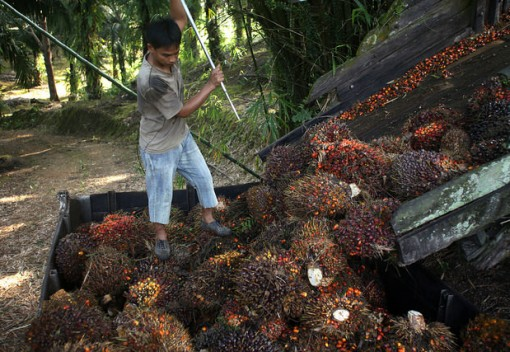 Malaysia Palm Oil Producer Sets Sustainable Example