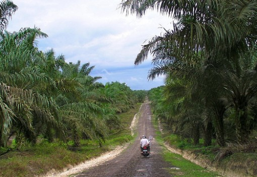 Can Palm Oil be Sustainable?