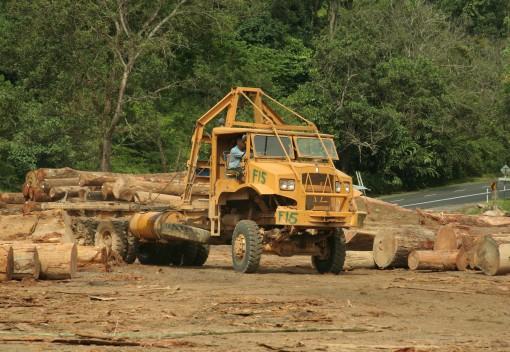 Sarawak Raids 240 Companies Linked to Illegal Logging in Malaysia