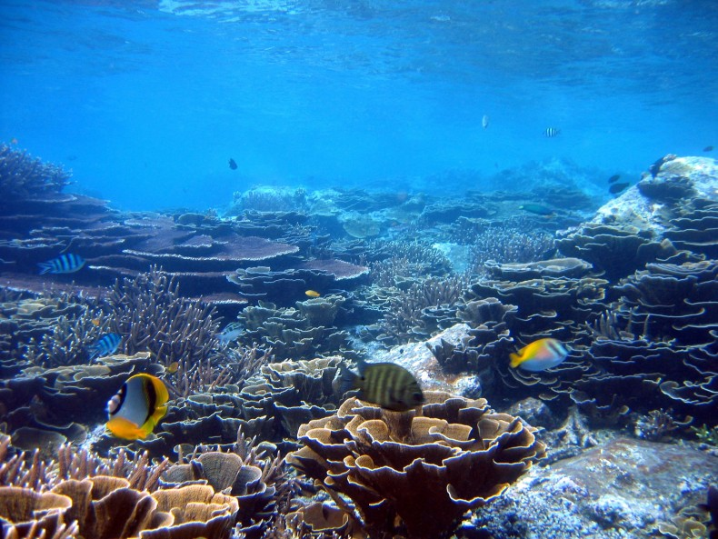 Saving the Ocean One Reef at a Time