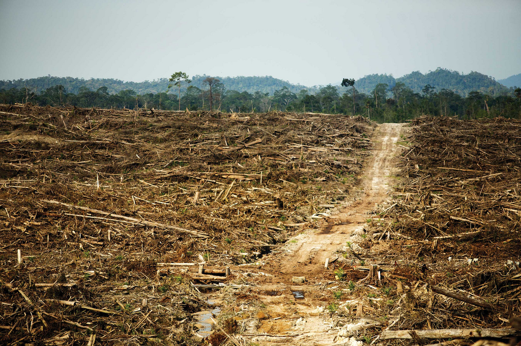an analysis of the destruction of the rainforest