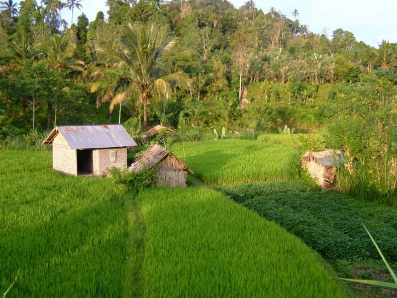 The Rice of Sustainable Agriculture
