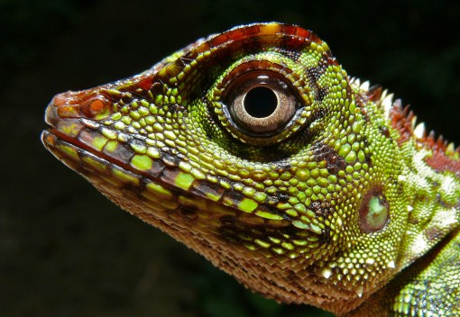 Borneo's Massive Ecological Experiment