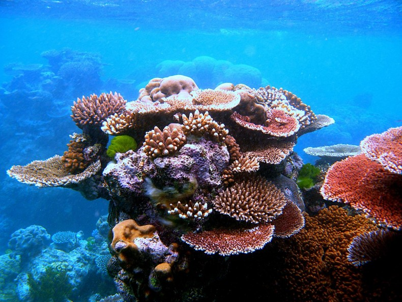 Restore our Awesome Reefs