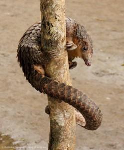 Forest fragmentation, SAFE project, palm oil, palm oil deforestation, biodiversity, oil palm plantation, logging