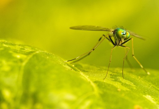 A New Weapon in the Fight against Dengue Fever