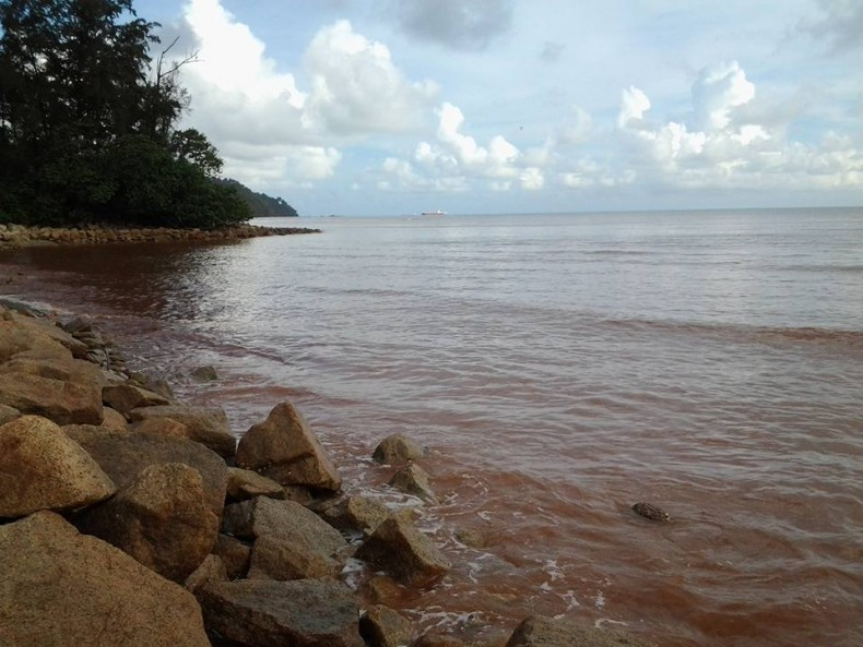 Bauxite Mining in Malaysia Fills Fish with 100 Times the Acceptable Level of Arsenic