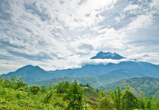 Illegal Deforestation in Malaysia | What's Happening and What you can Do
