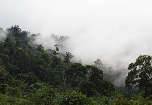 A Third of Sabah to be Protected by 2025?