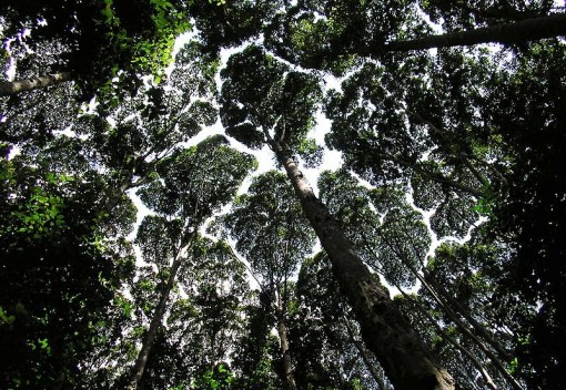 A Ray of Hope: Malaysia's Forests are Slowly Growing