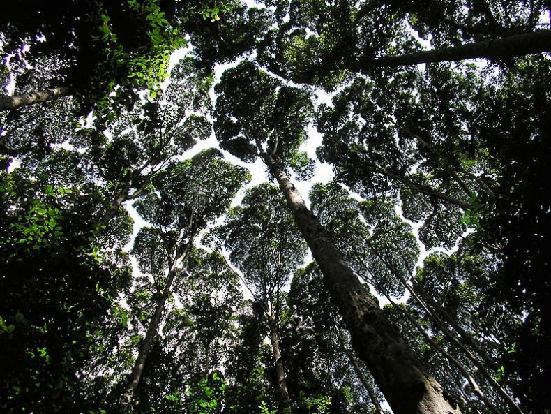 A ray of hope malaysia 39 s forests are slowly growing for Forest floor definition