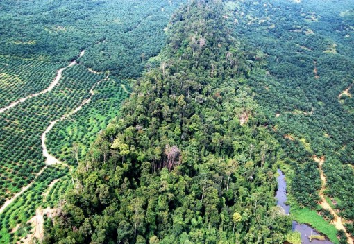 New Sabah Road Project Threatens Habitats of Elephants and Orangutans