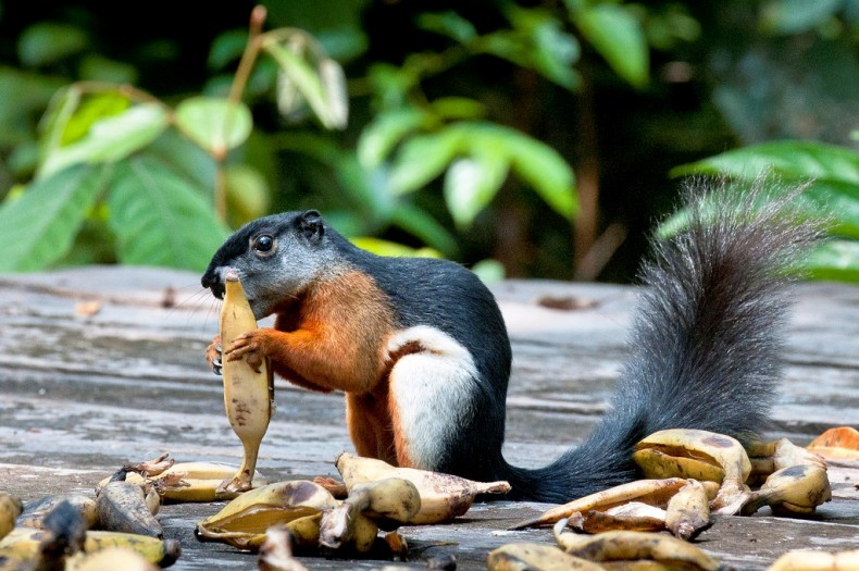 Shrews and Squirrels: Our Oft-Neglected Little Critters