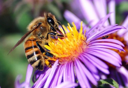 Pollinators Will Need Our Attention