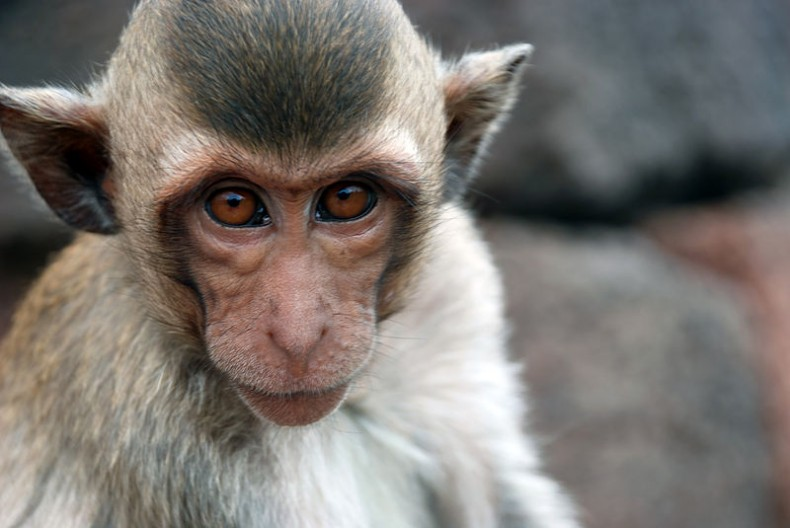 May the Year of the Monkey be a Good One for Malaysia's Environment