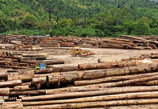 Malaysia's Forests May Not Be Growing After All