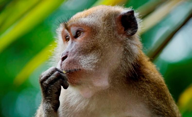 Putrajaya Revises National Policy on Biodiversity. Fingers Crossed?