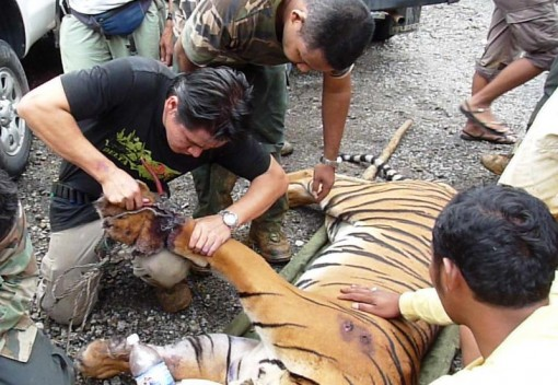 Malaysia's Lax Enforcement is failing Endangered Species