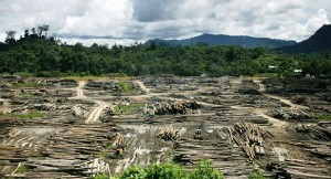 deforestation has left gaping wounds in Sarawak's forested landscape. Photo Credit: Wikimedia Commons