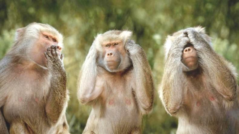Seeking to Stop Corrupt Politicos Monkeying Around