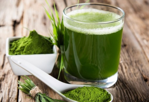 Could Humble Algae Revolutionize the Food Industry?