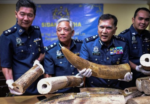 A Haul of African Ivory is Seized at KLIA
