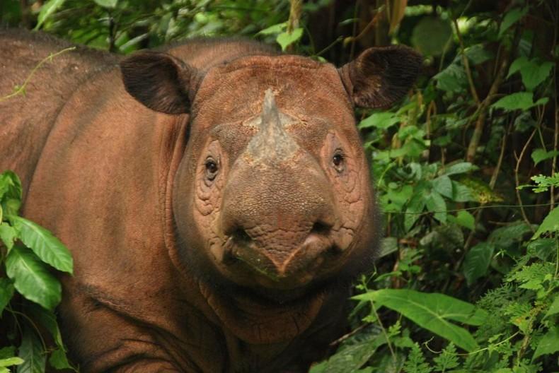 Rewilding Malaysia? A Student Thinks So