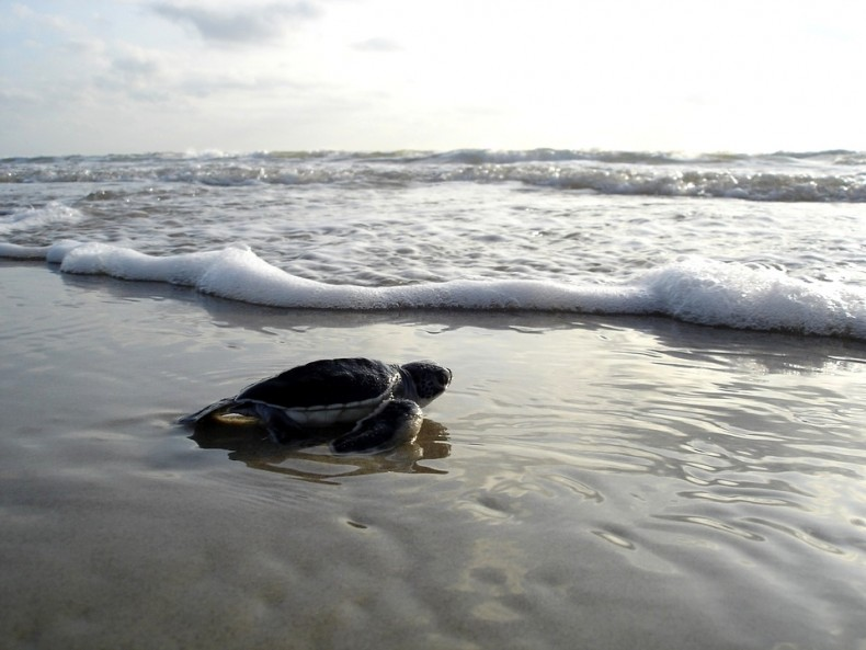 A Green Turtle Dies … but Others May Yet Live