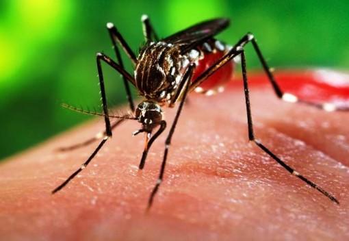 Malaysians Must Stay Alert about Zika