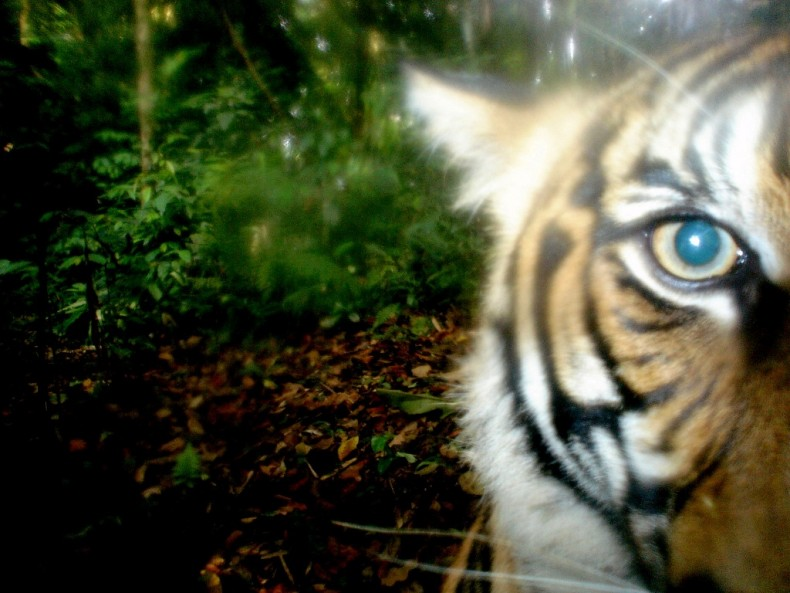WWF: Foreign Poachers are Targeting Malaysia's Forests