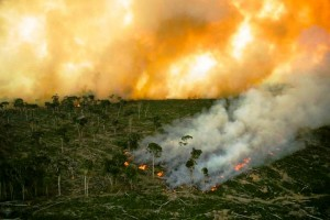 A fire decimates a forest in Borneo. Photo Credit: Borneo Project