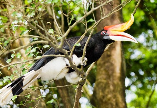 Let's Save the Majestic Hornbills