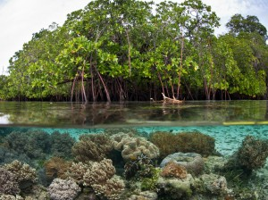 Mangroves support a diversity of life both above and below water. Photo Credit: inhabitat
