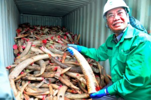 Natural Resources and Environment Minister Dr Wan Junaidi Tuanku Jaafar with the elephant tusks that were later destroyed by the government. Photo Credit: Bernama