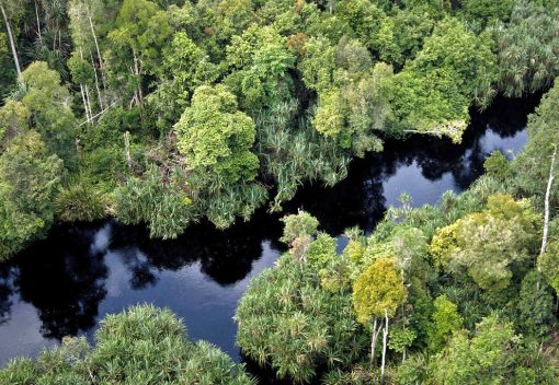 Saving Malaysia's Peatlands is a Must