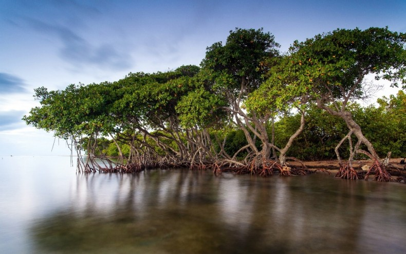 Selangor Mangroves get some welcome new Dashes of Green