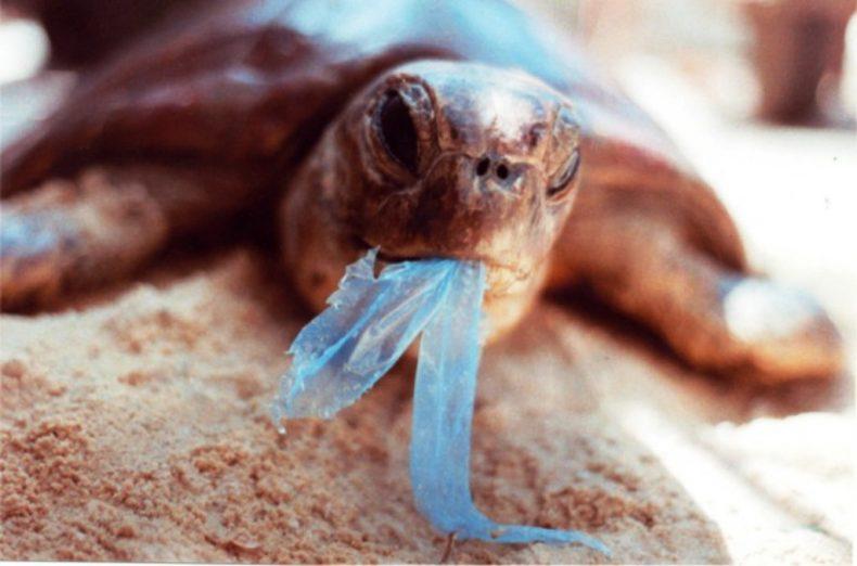 """""""Don't Ban Plastic,' Lobbyist Pleads"""