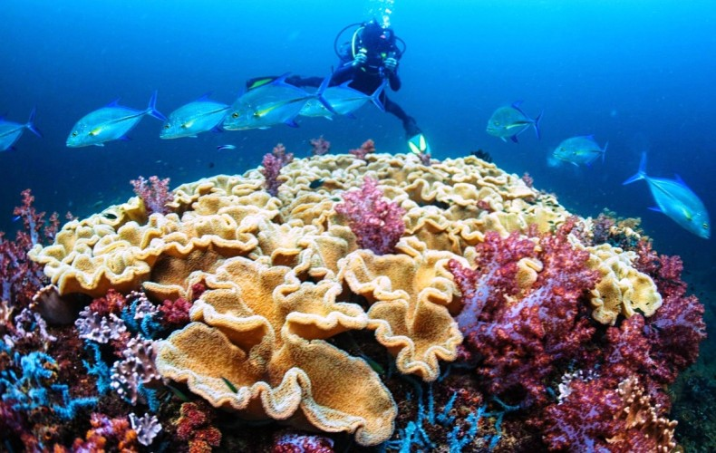 'Extreme' Corals may help us save Stressed Reefs