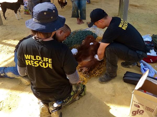 Sarawak may get a new Wildlife Department