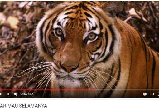 Documentary urges Malaysian Muslims to save the nation's Tigers