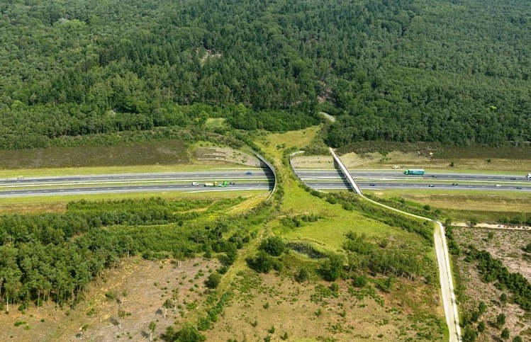 New Wildlife Crossings are in the Works
