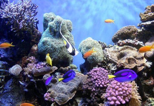 Saving Malaysia's Coral Reefs