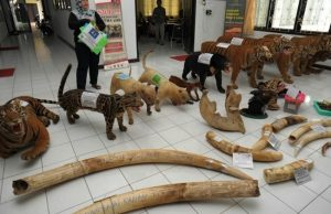 The illegal items discovered at three smugglers' house in Indonesia contained a large cache of dead animals and their parts. Photo Credit: AFP