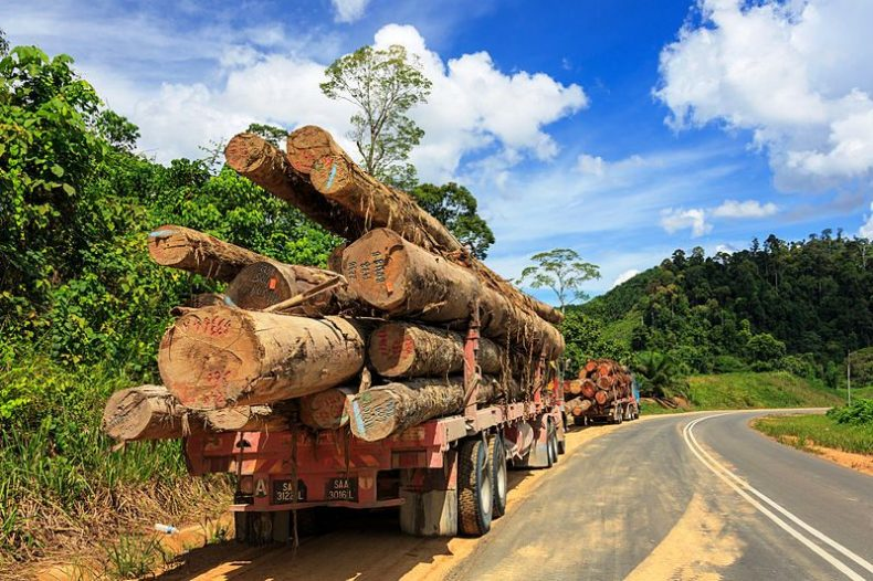 Customs Officers are at the Frontlines against Illegal Timber Smuggling