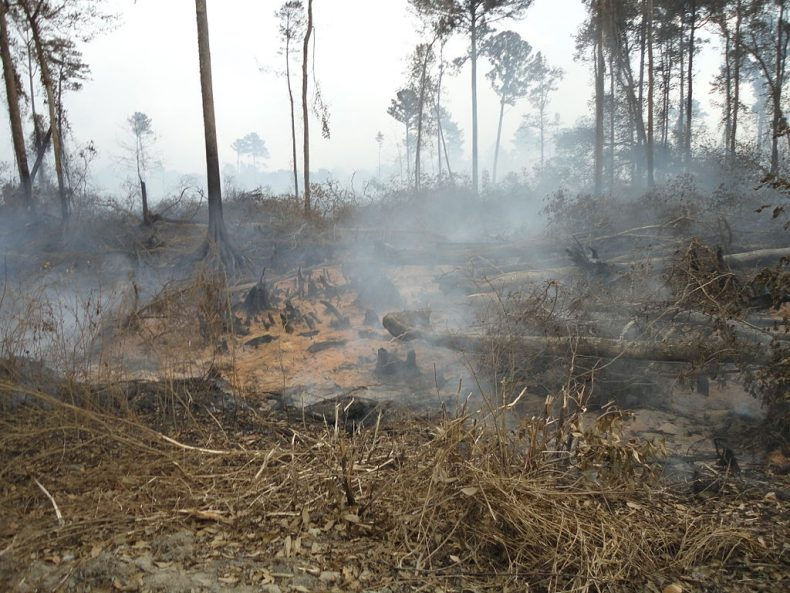 The Fiery Peats of Haze in Southeast Asia
