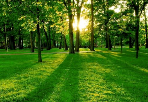 Trees measurably improve your Mood