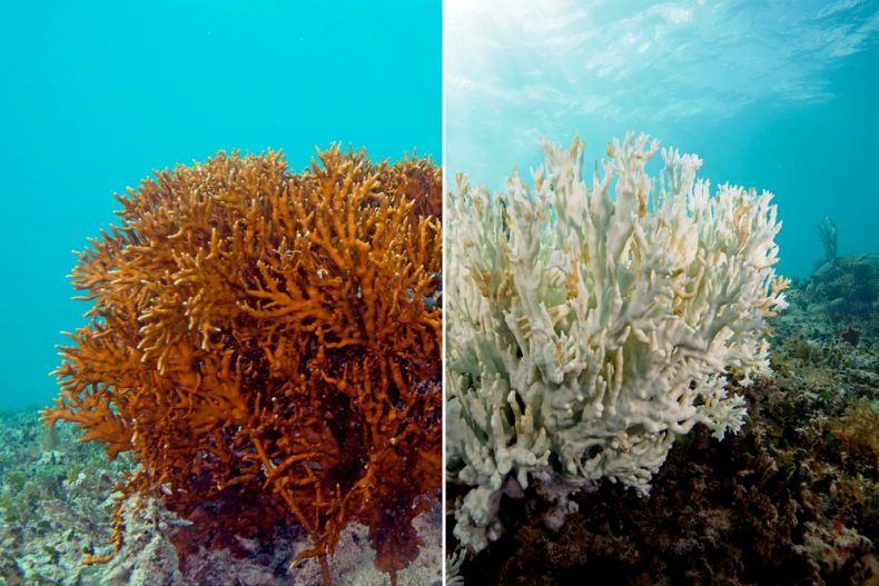 Malaysian Coral Reefs are at increasing risk of Mass Bleaching