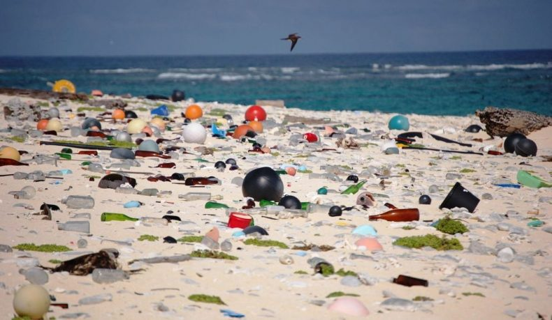 Bacteria to the Rescue: Two Students co-opt them to clean up Plastic Waste